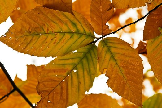 Autumn leaves of bright fall colors close up