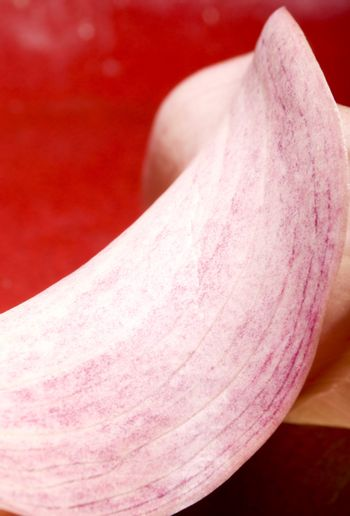 Pink cala lilly abstract on red