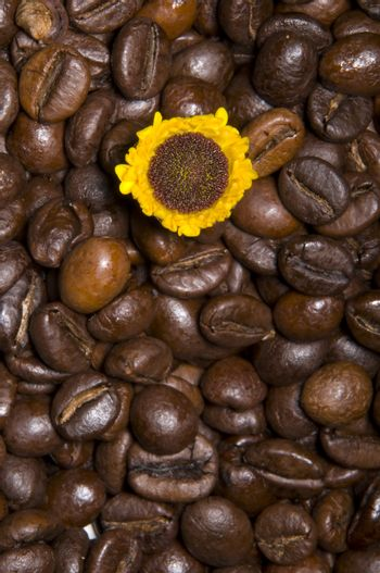 Texture with coffee beans and sunflower