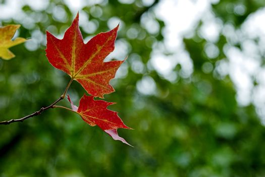 Beautiful colored fall leaves - Great Autumn background