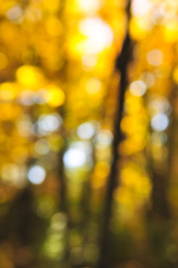 Green natural background of out of focus autumn forest or bokeh