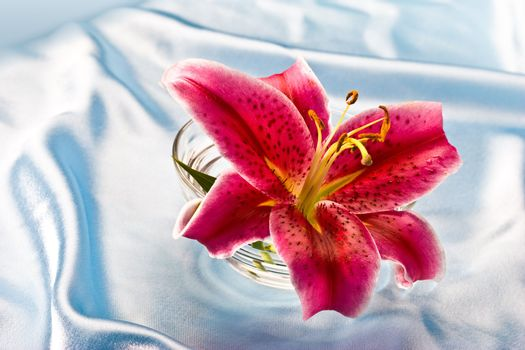 macro picture of pink lily, romantic mood