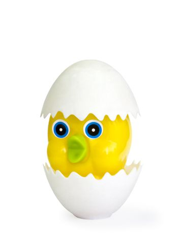 The yellow chicken hatched from egg with a white shell. Isolated on white.