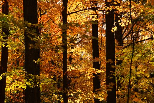 Scenic view of sunlit colorful forest in the fall