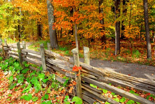 Scenic view of colorful forest in the fall and country road