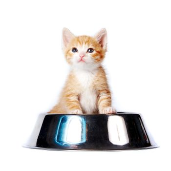 Red kitten in the big bowl for a forage on a white background