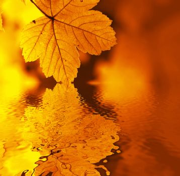 An image of yellow leaf