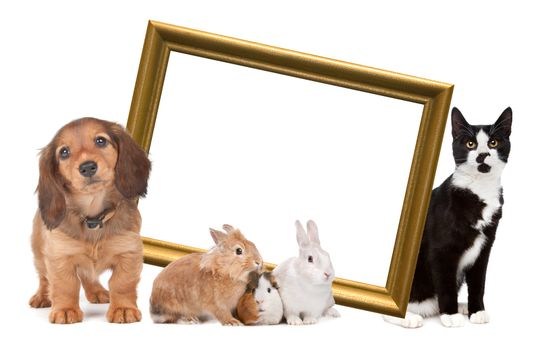 group of pets standing around a golden picture frame in front of a white background