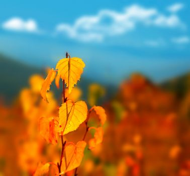Autumn background with dry yellow leaves