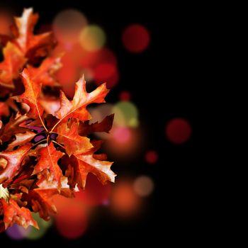 Autumn Isolated On Black