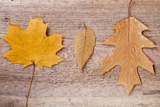 three autumn leaves on wooden background