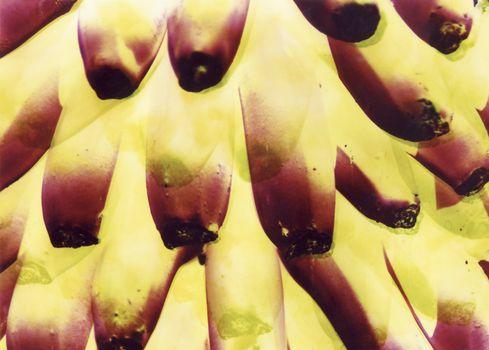abstract bananas