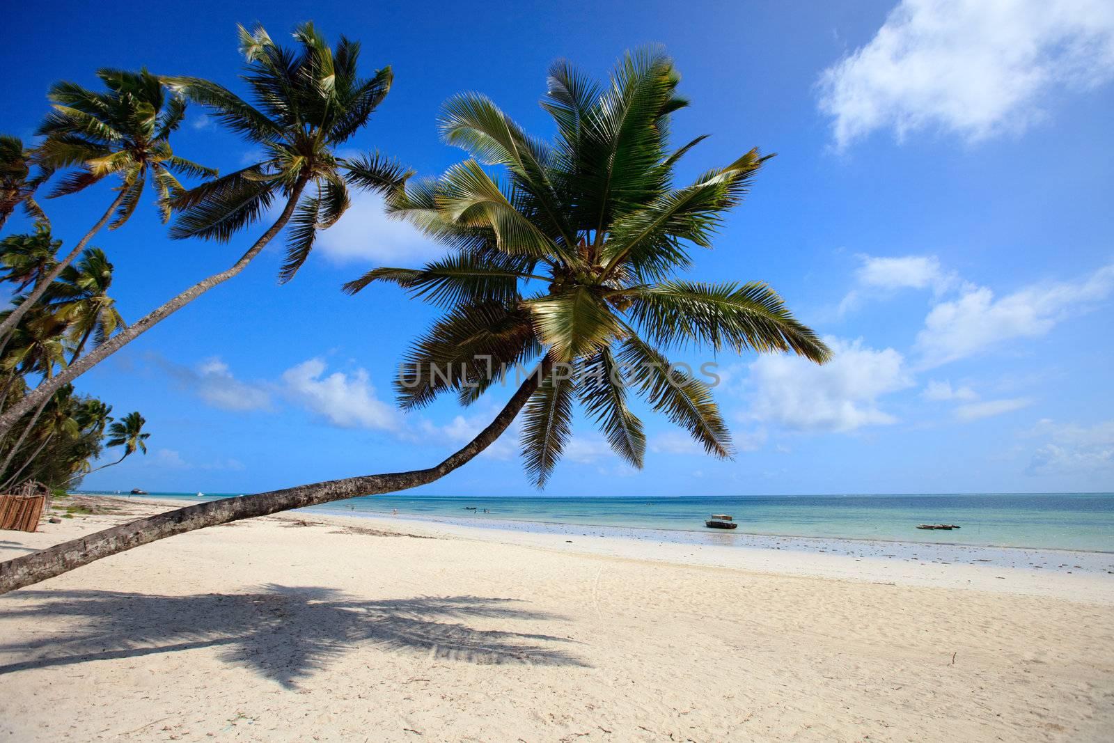 White sand tropical beach with palm trees on north-west coast of Zanzibar island