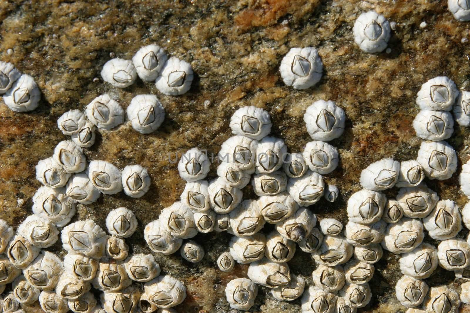Sea animals on a surface of a rock