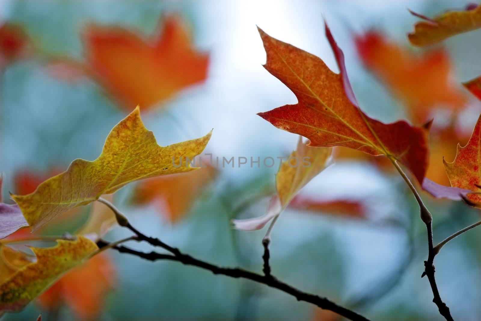 Fall leaves by Iko