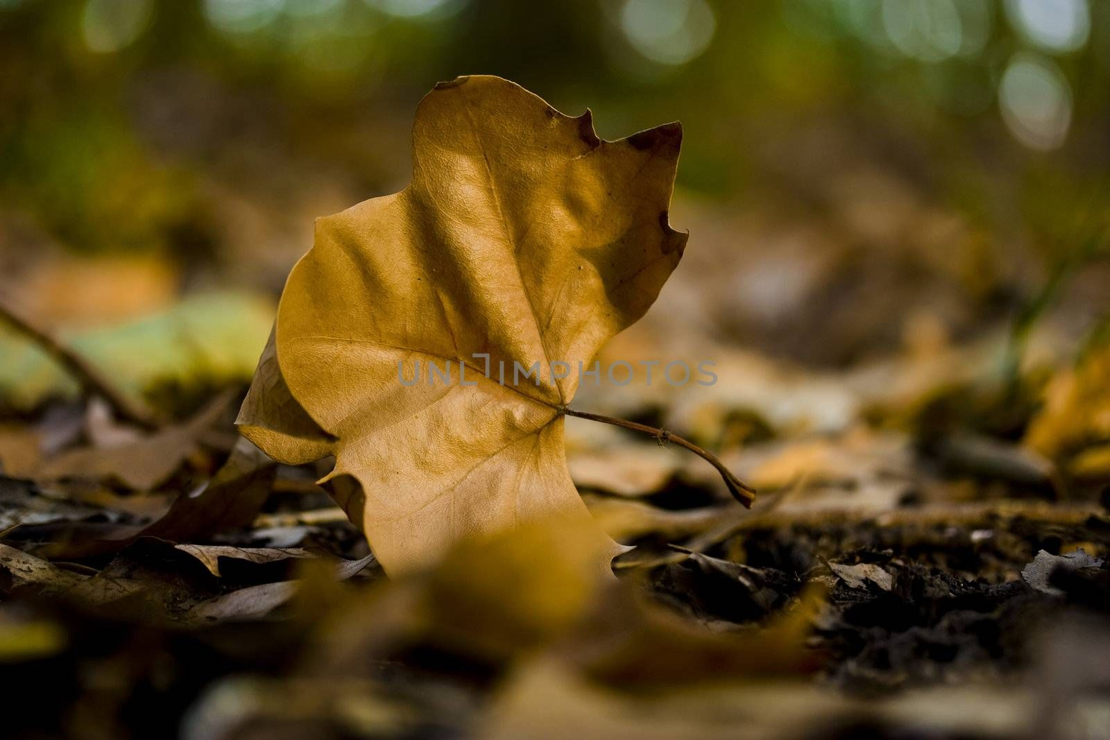 Beautiful yellow fall leave on the ground