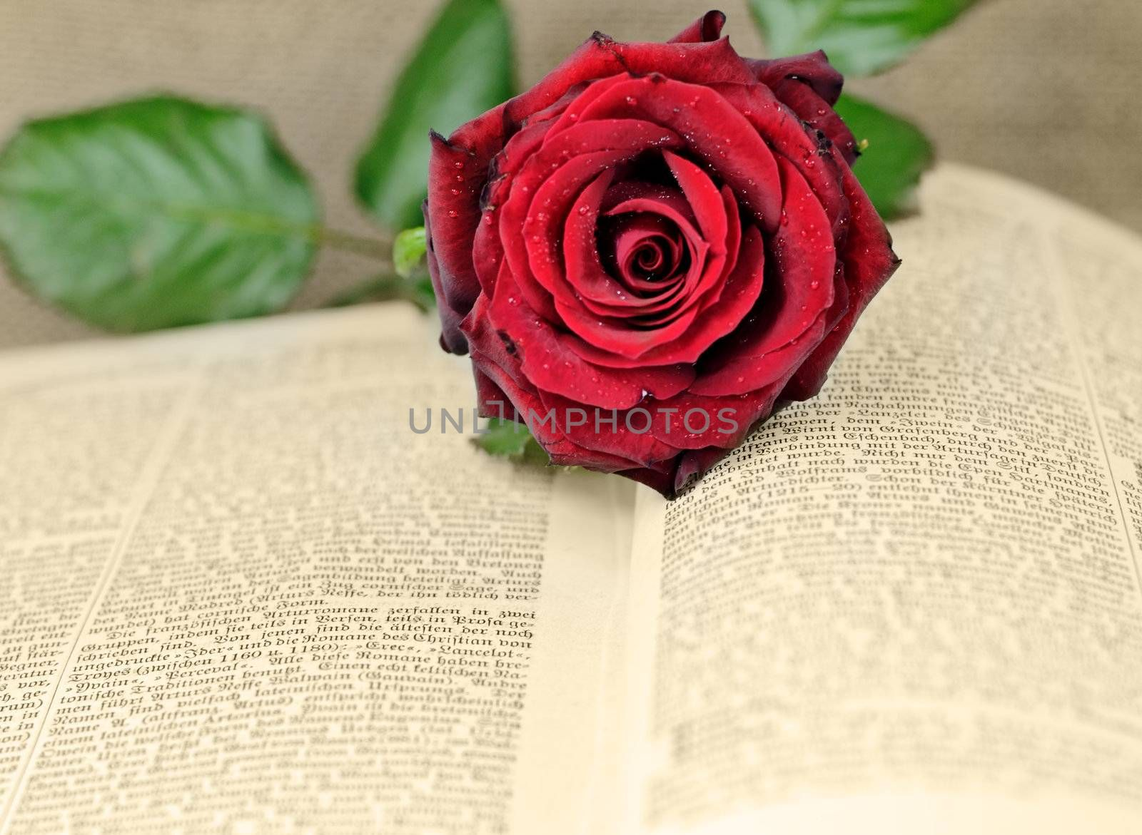 an open book covered with a red rose