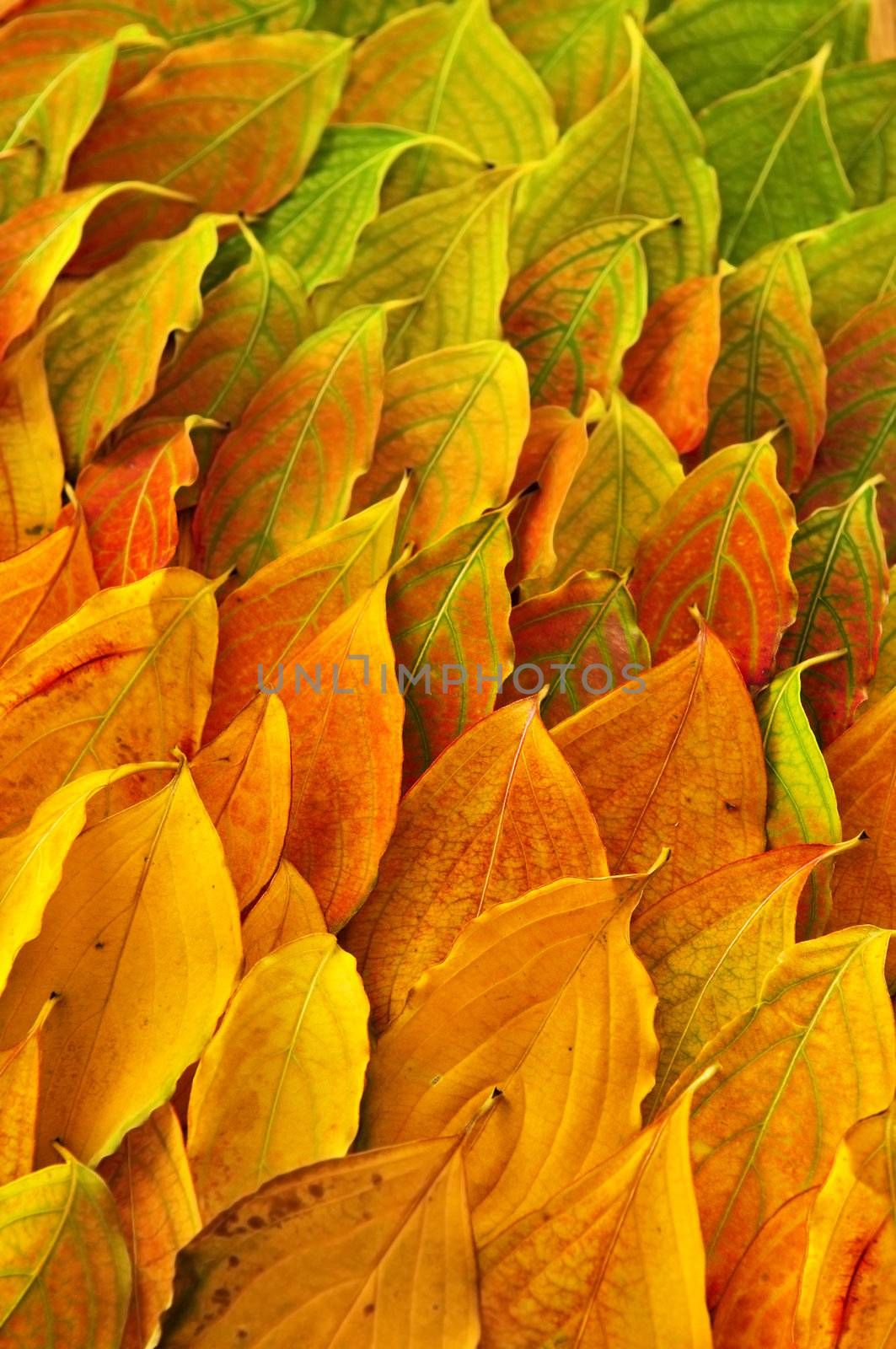 Autumn leaves background by elenathewise