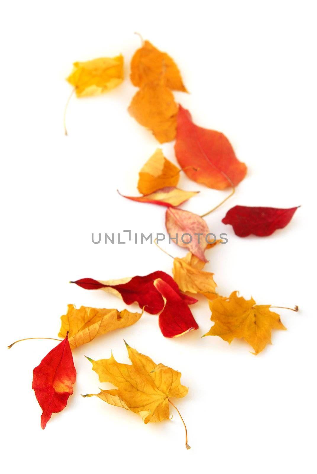Dry colorful autumn leaves on white background