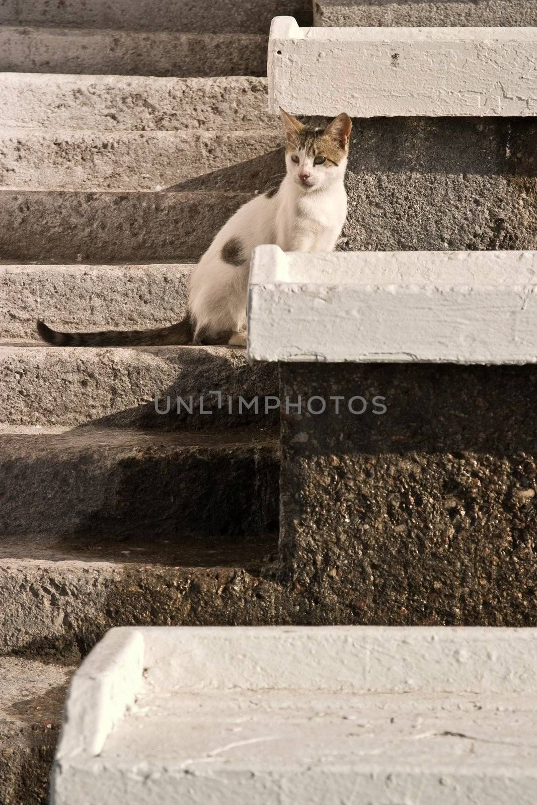 pets series: white cat  on the stairs