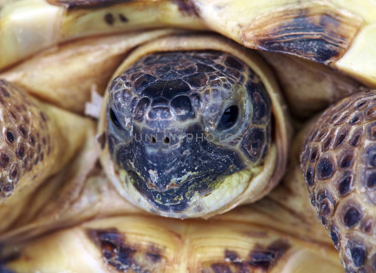 Photo of a turtle close up...