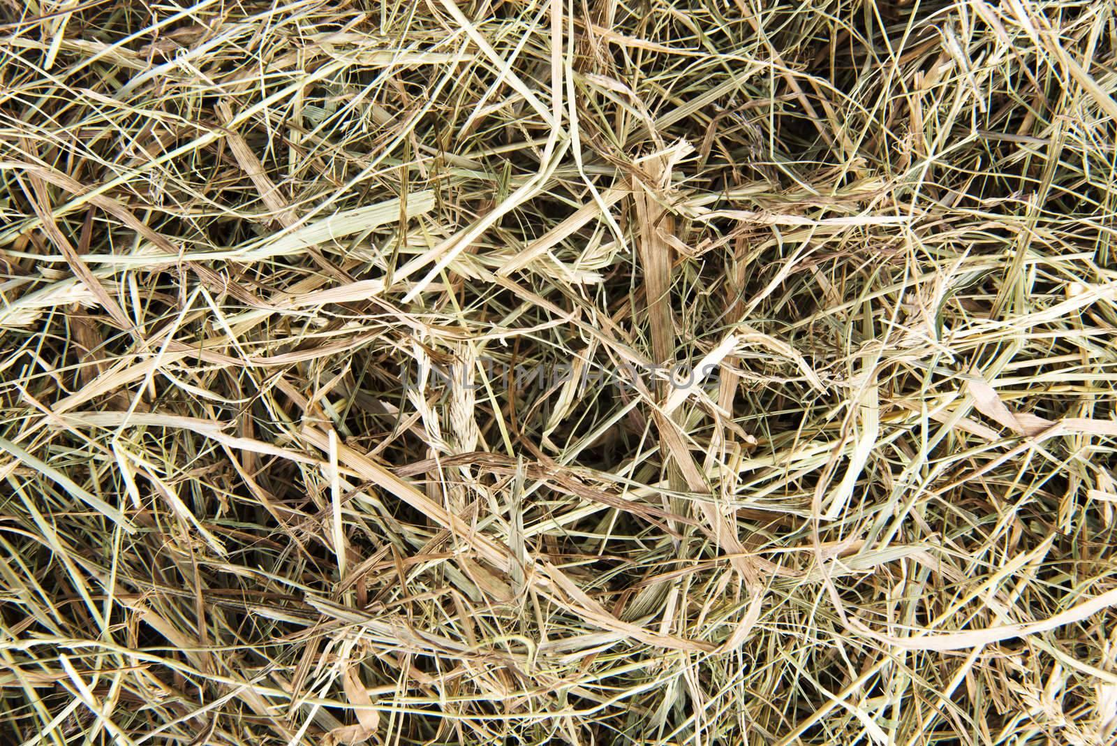 Golden hay texture