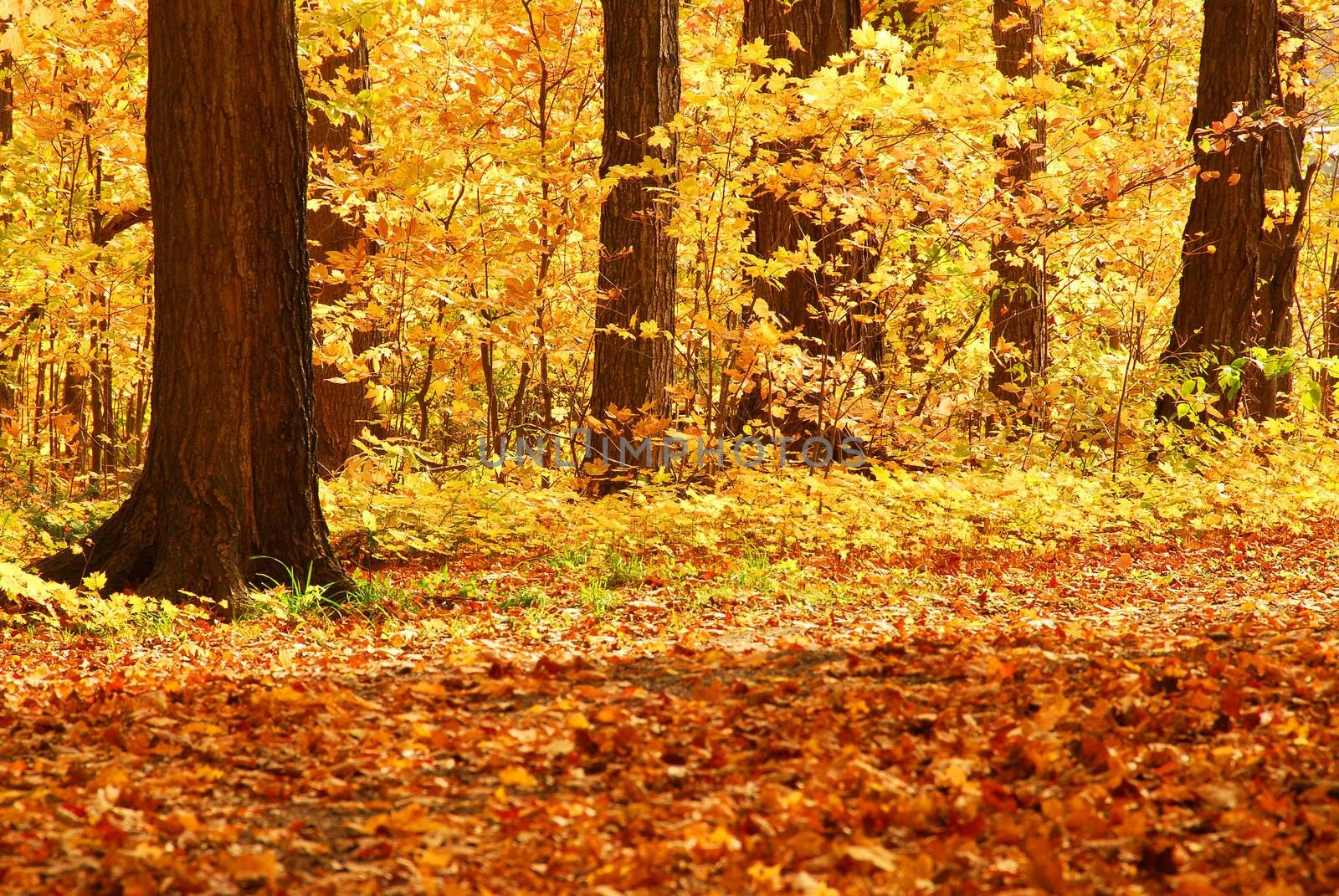 Scenic view of colorful forest in the fall