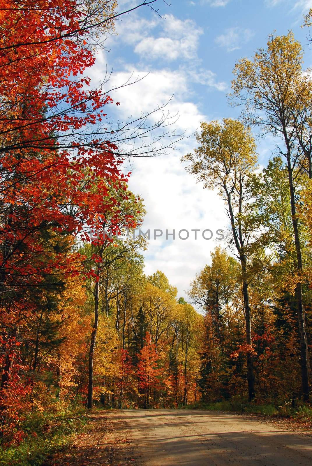 Forest road in the fall