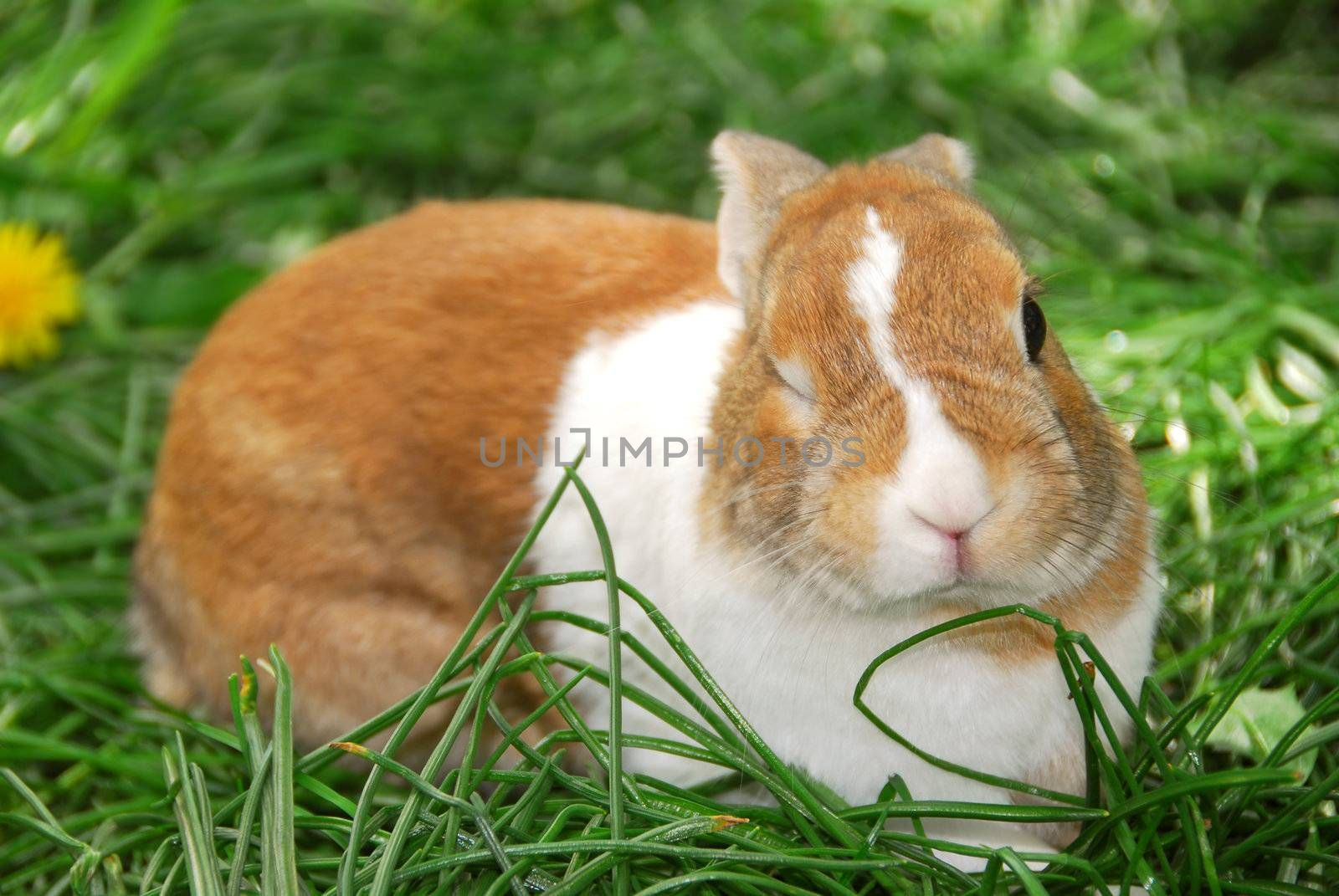 Cute easter bunny sitting on green grass and winking:)