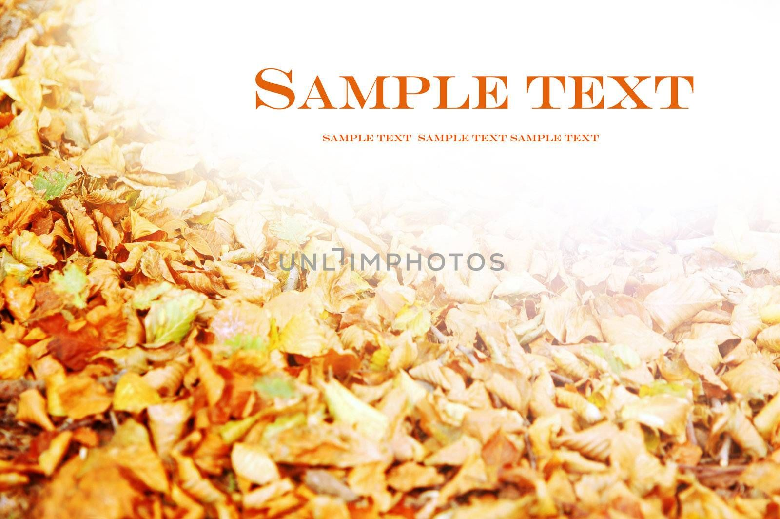 Autumn, fall background with copyspace