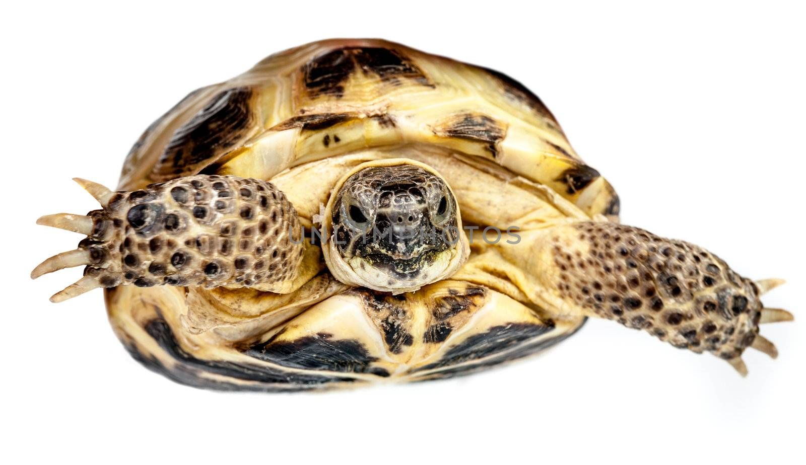 Photo of a turtle on a white background