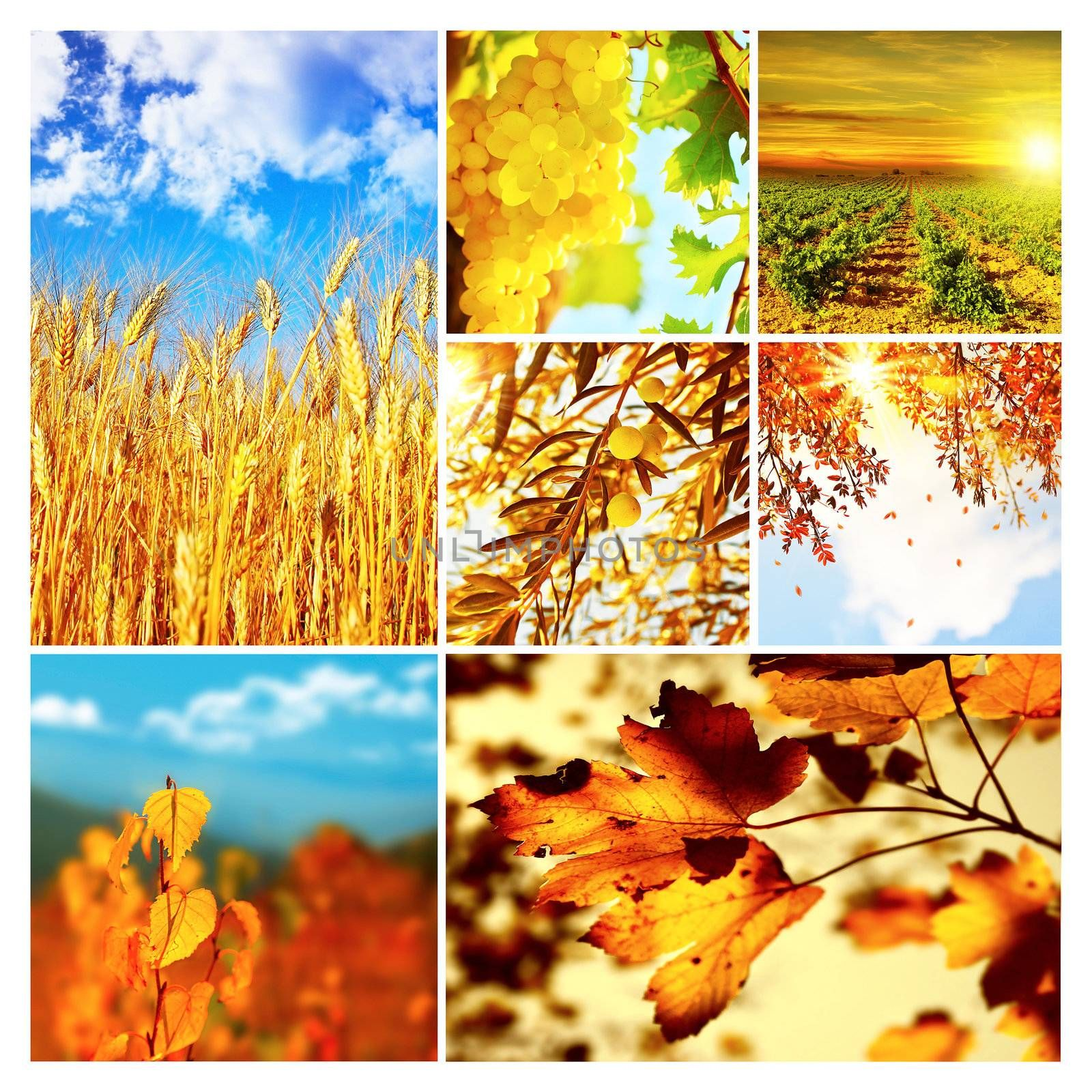 Autumn nature collage, collection of beautiful images of growing fruits, wheat and falling old dry tree leaves, seasonal time of the year, agriculture at harvest