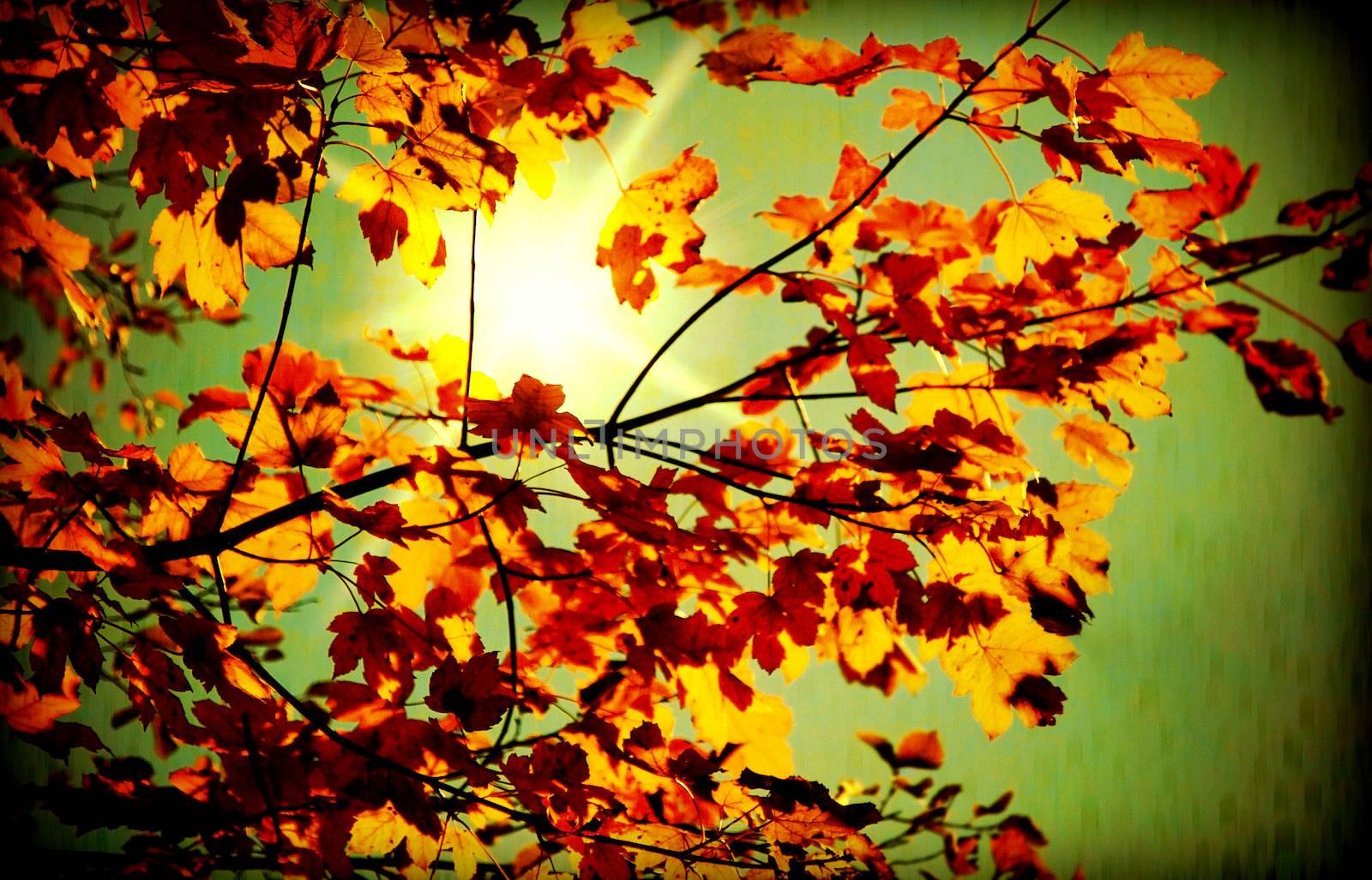 Grunge autumn dark background with sunlight