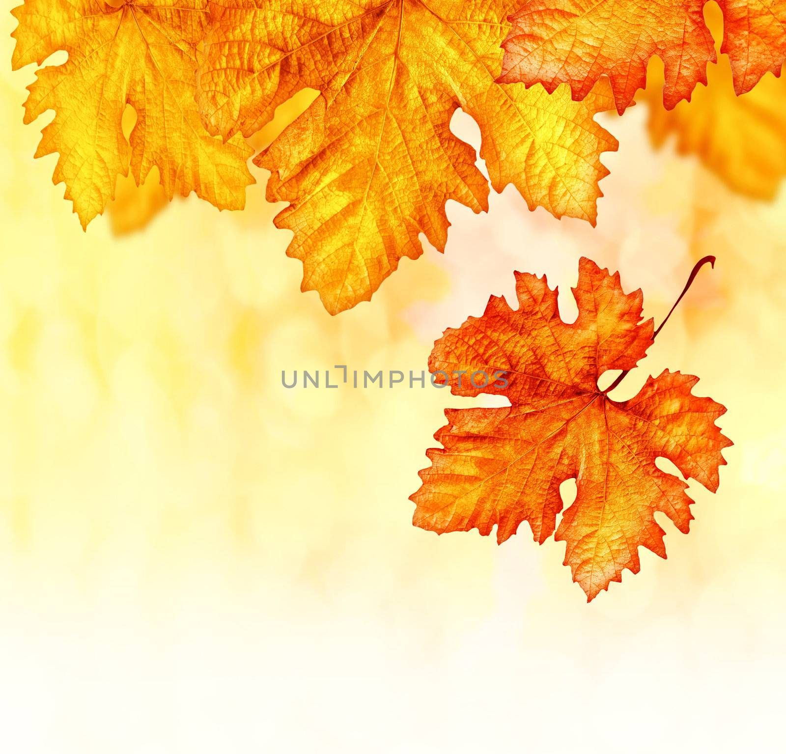 Abstract autumn background, orange autumnal backdrop, dry leaves border, old golden plants decoration, yellow foliage outdoor in october, autumn seasonal concept, brown flora textured wallpaper