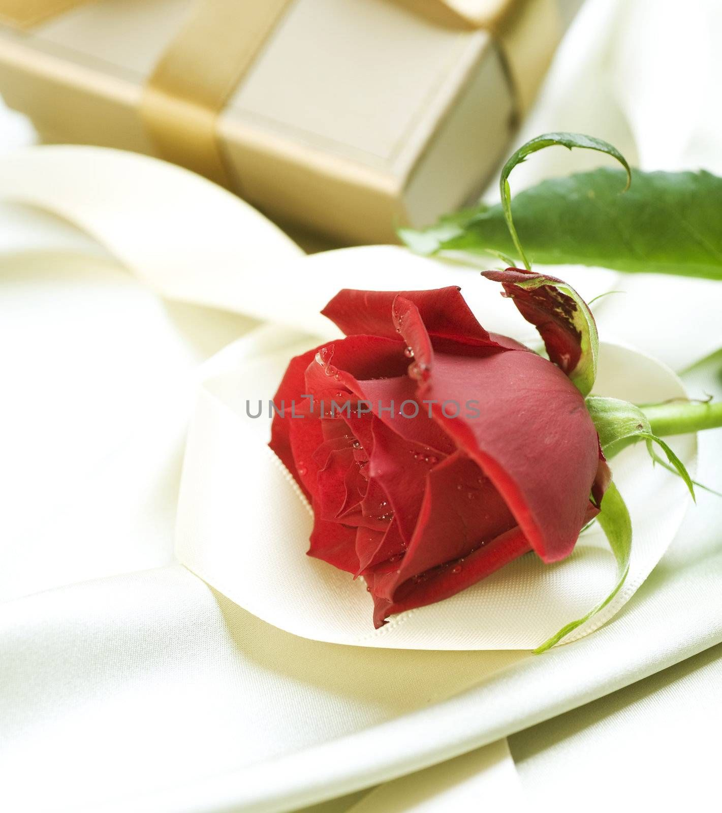 Romantic Gift and Rose