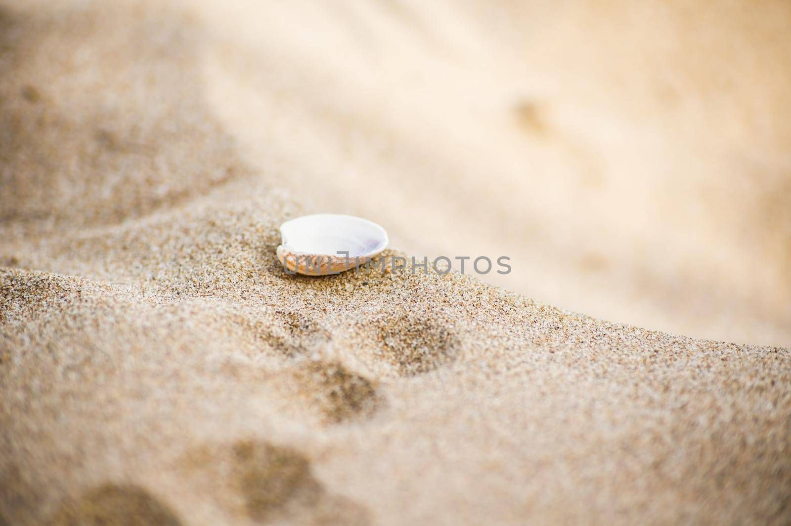 Vacation concept with sand beach and sea shell