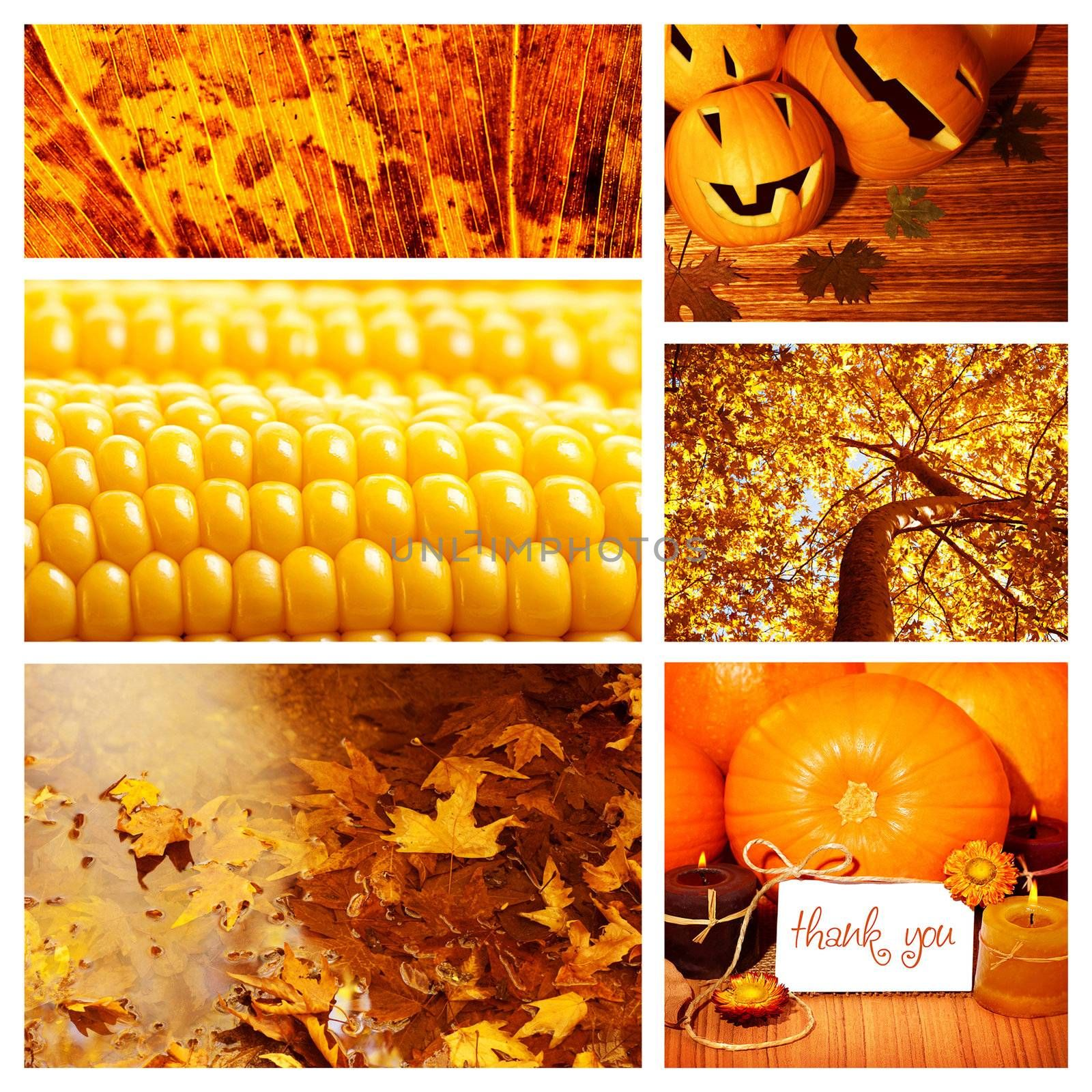 Photo of autumn season collage, autumnal dry foliage, sweet corn, thanksgiving day, pumpkin decoration, harvest season, fall forest, old orange leaves in water puddle, set of autumnal picture