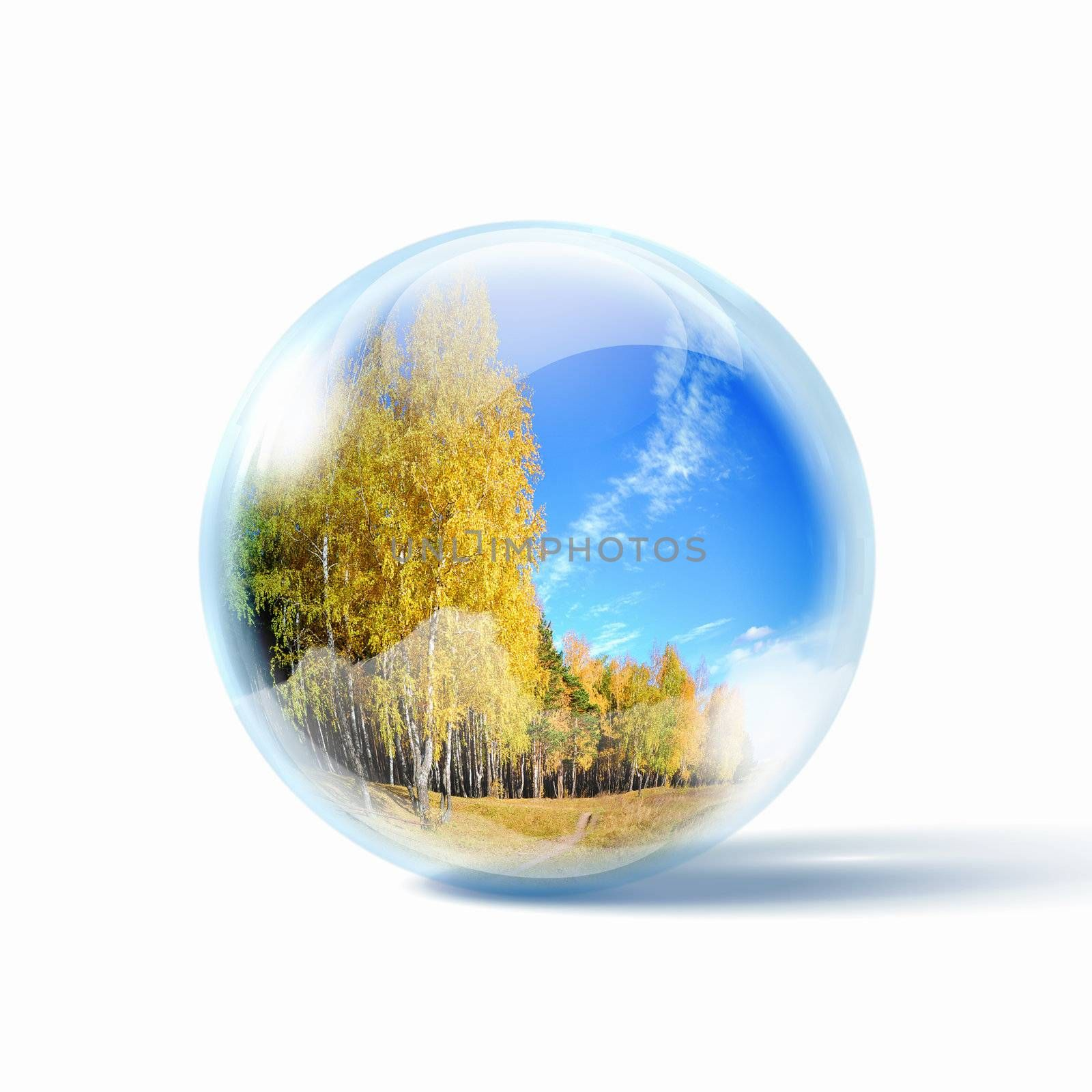 Autumn forest at day time inside a glass sphere