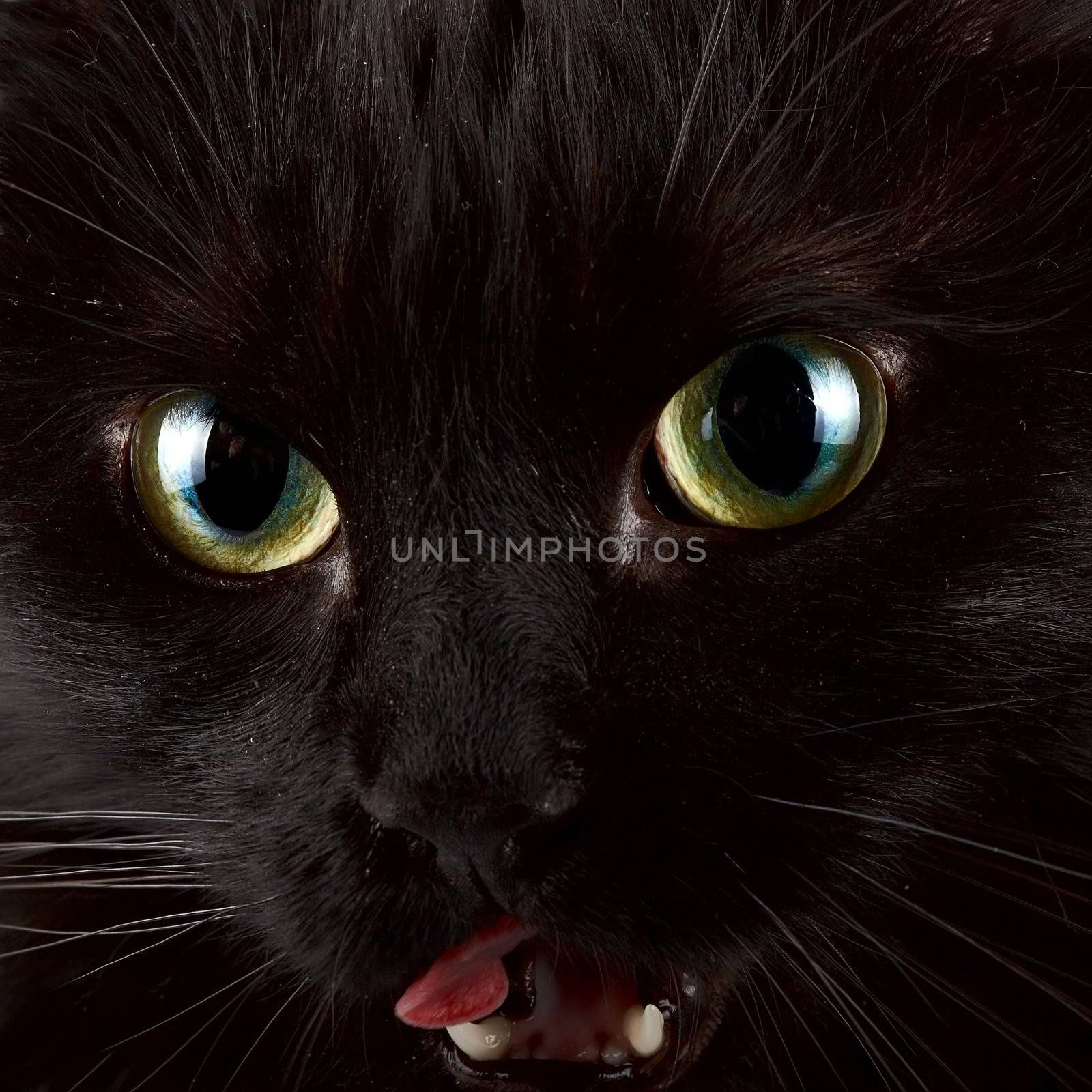 Green eyes of a black cat