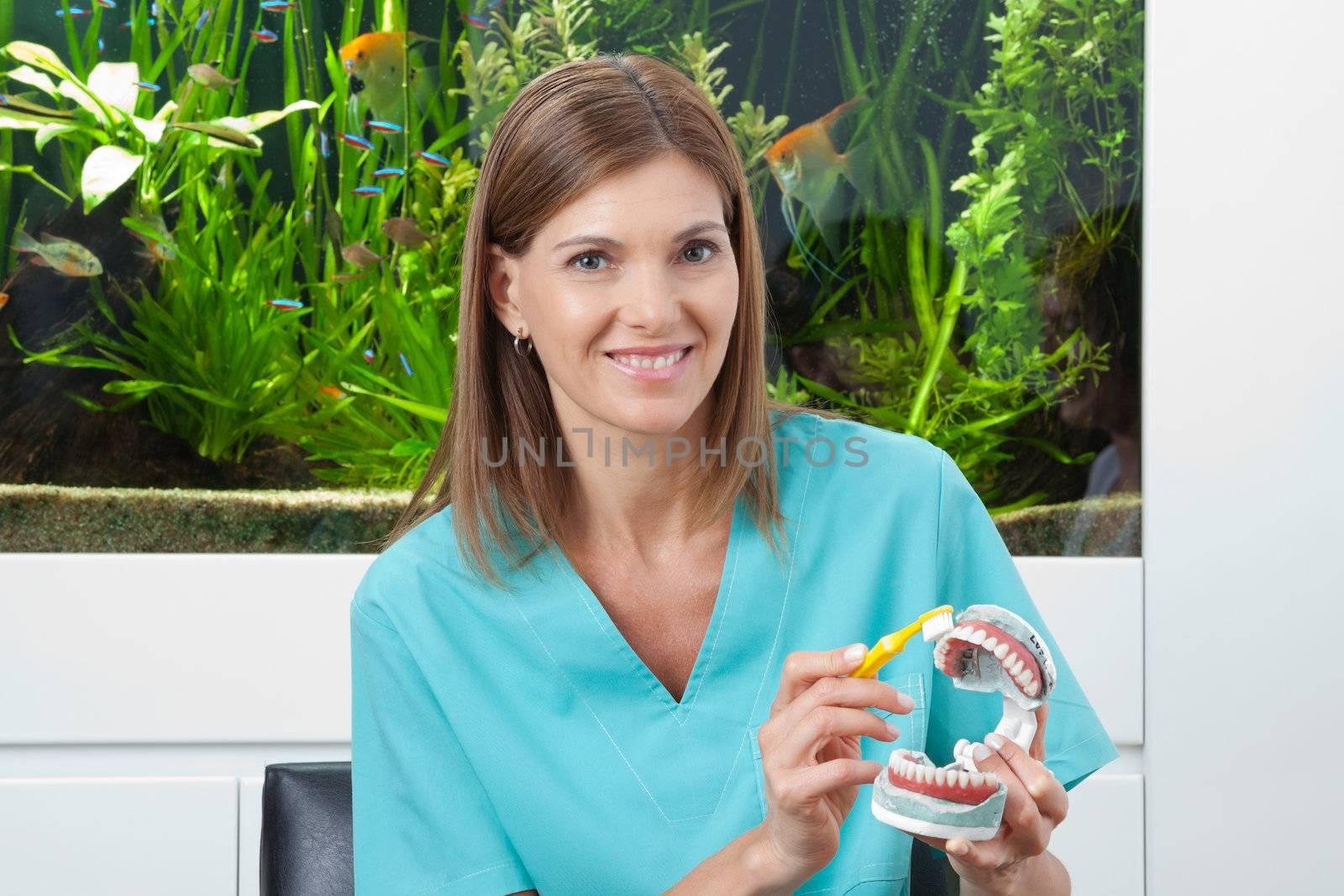Portrait of a happy female dentist brushing model teeth in clinic