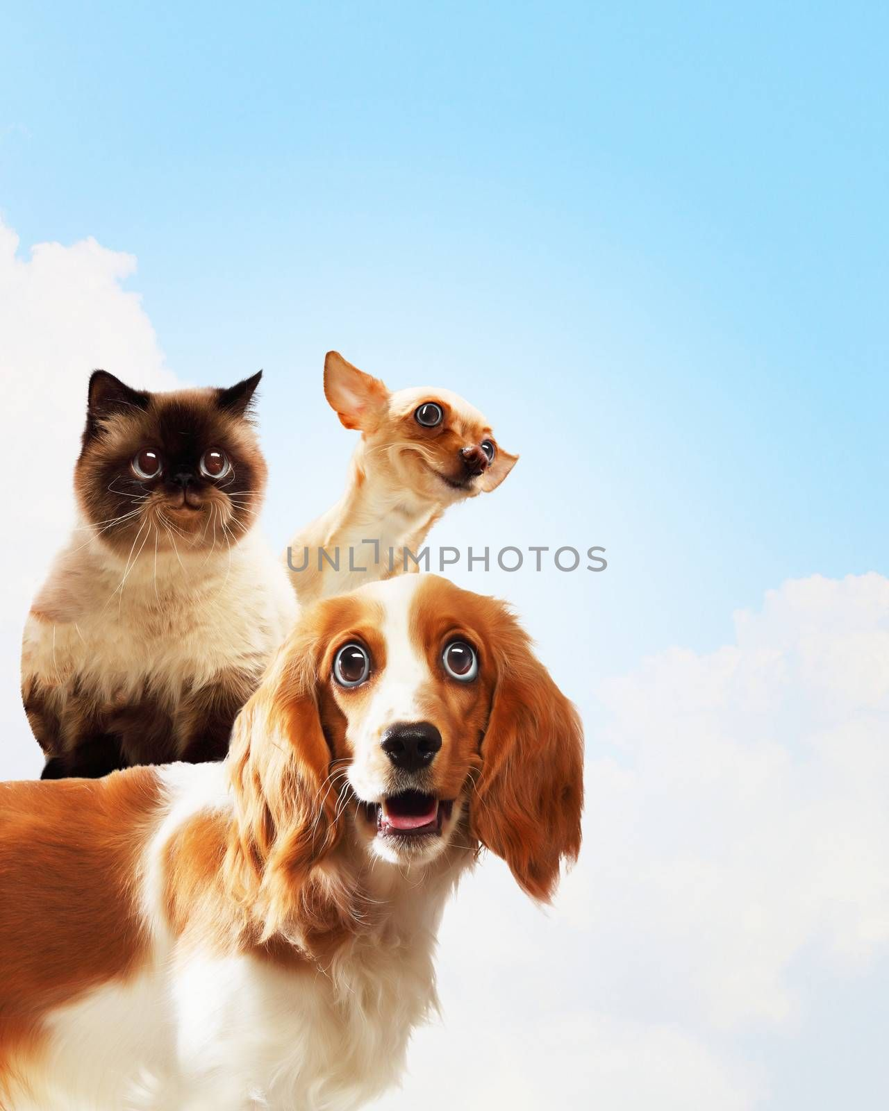 Three home pets by sergey_nivens