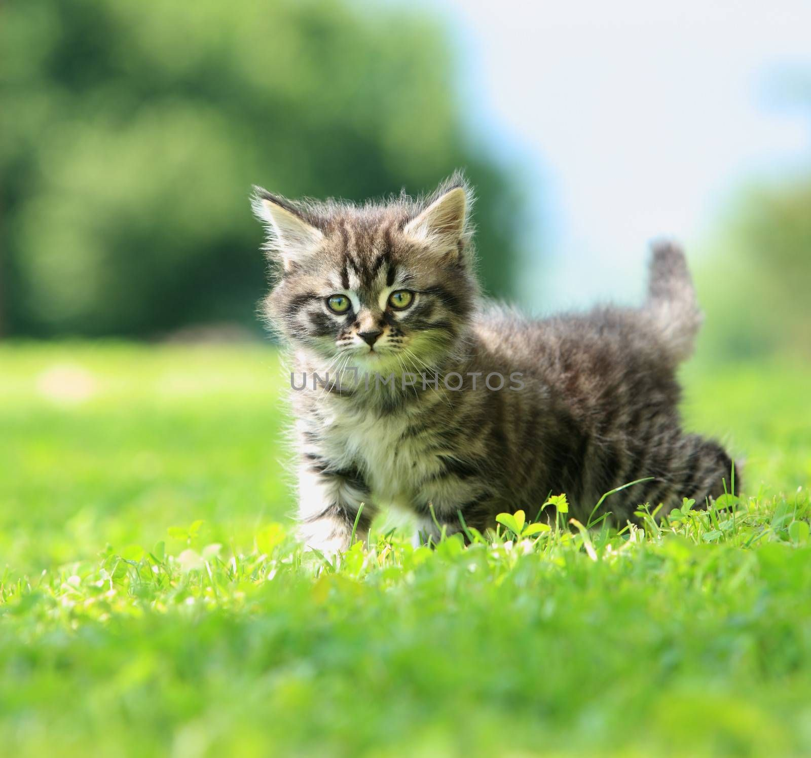 Cute little cat playing on the grass