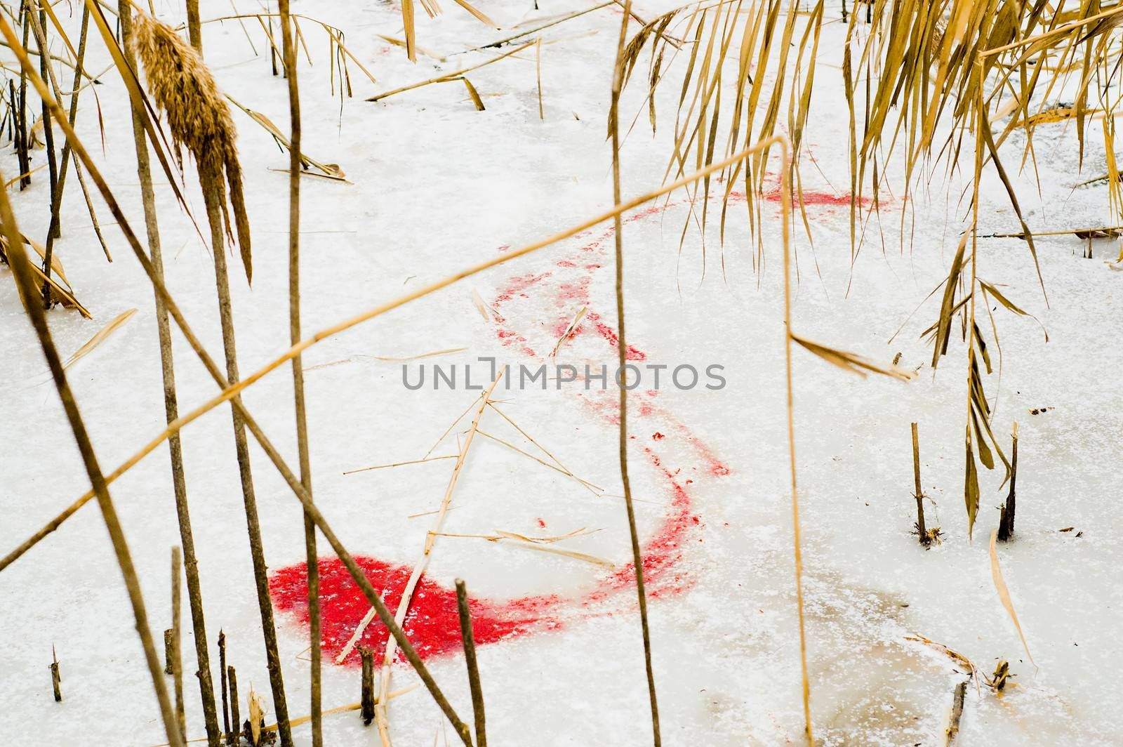 animals blood over snow