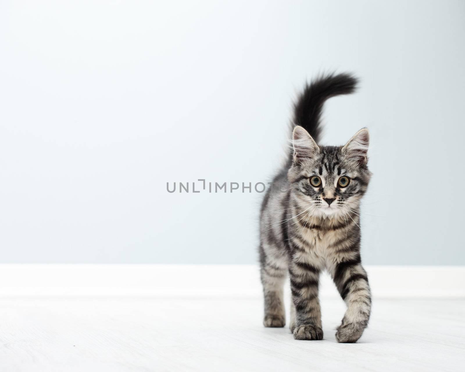 Cute kitten walking on floor at home