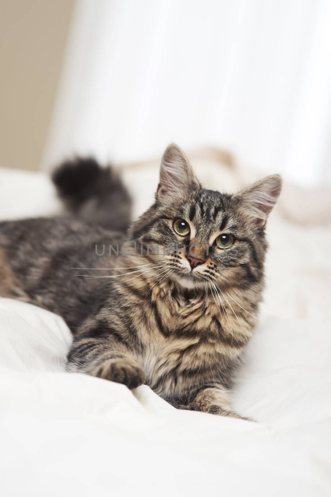 Portrait of a beautiful cat resting on a bed