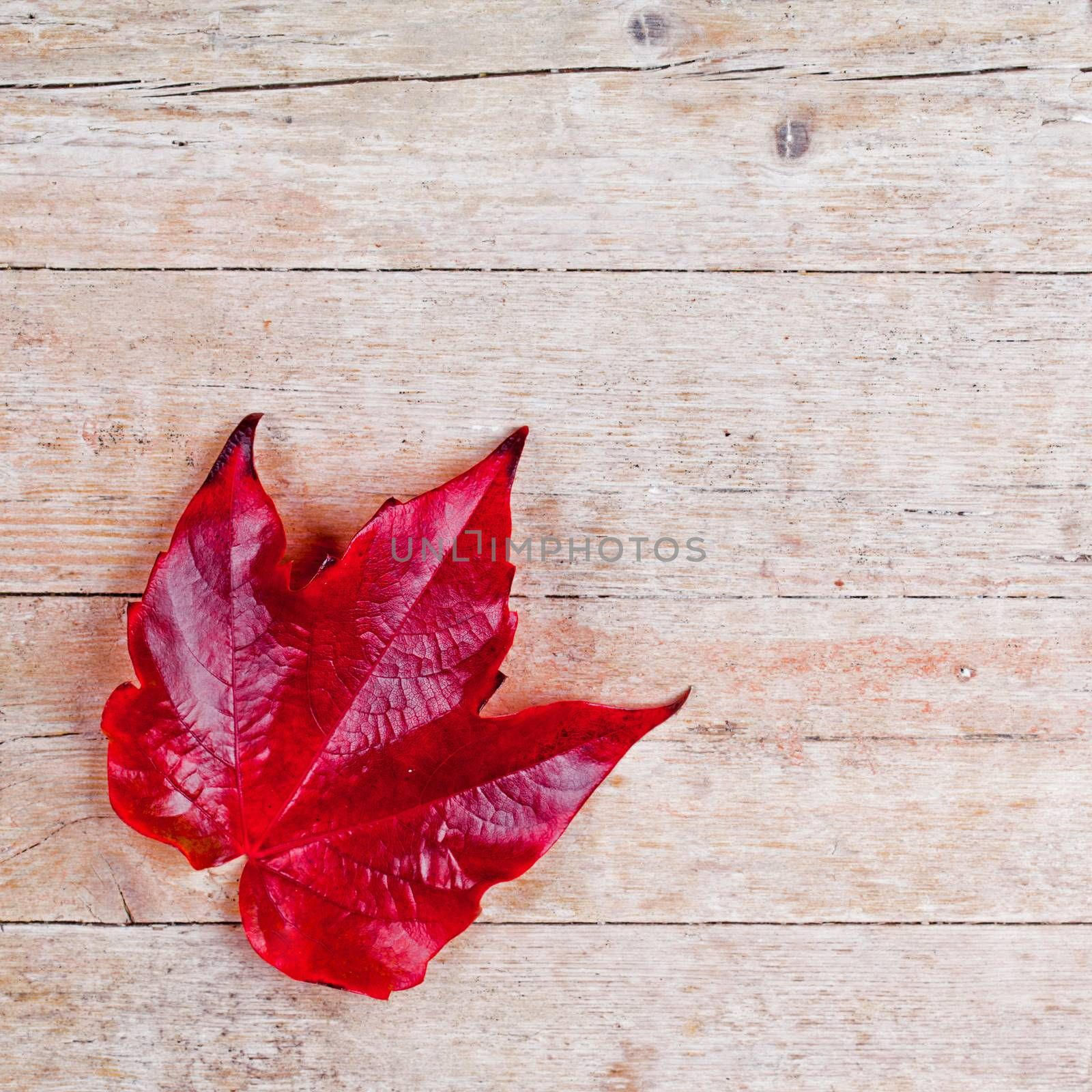 red autumn leaf on wooden background