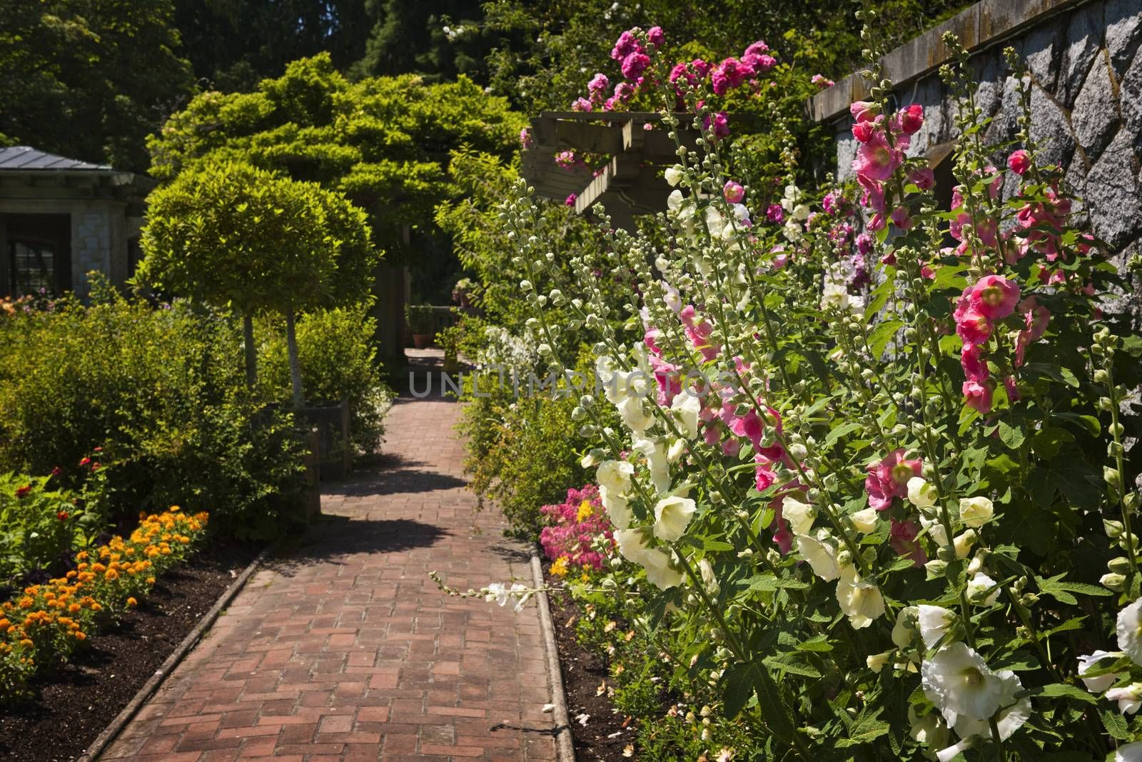 Lush summer garden with paved path and blooming flowers