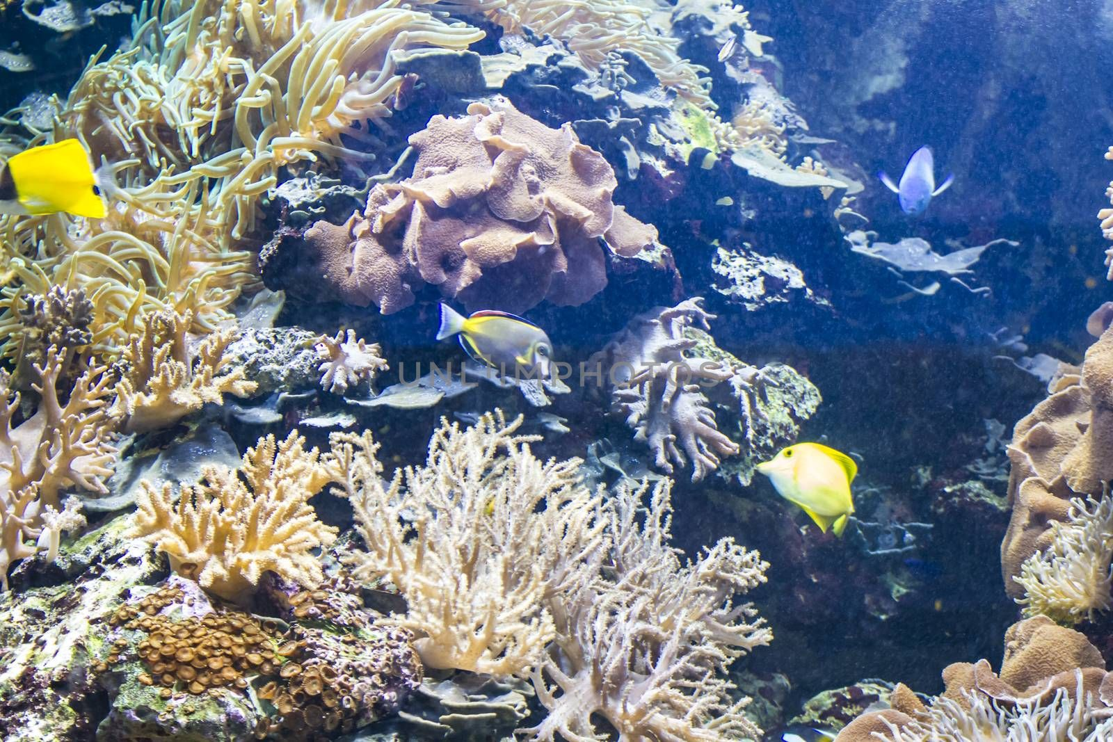 ecosystem, seabed with fish and coral reef
