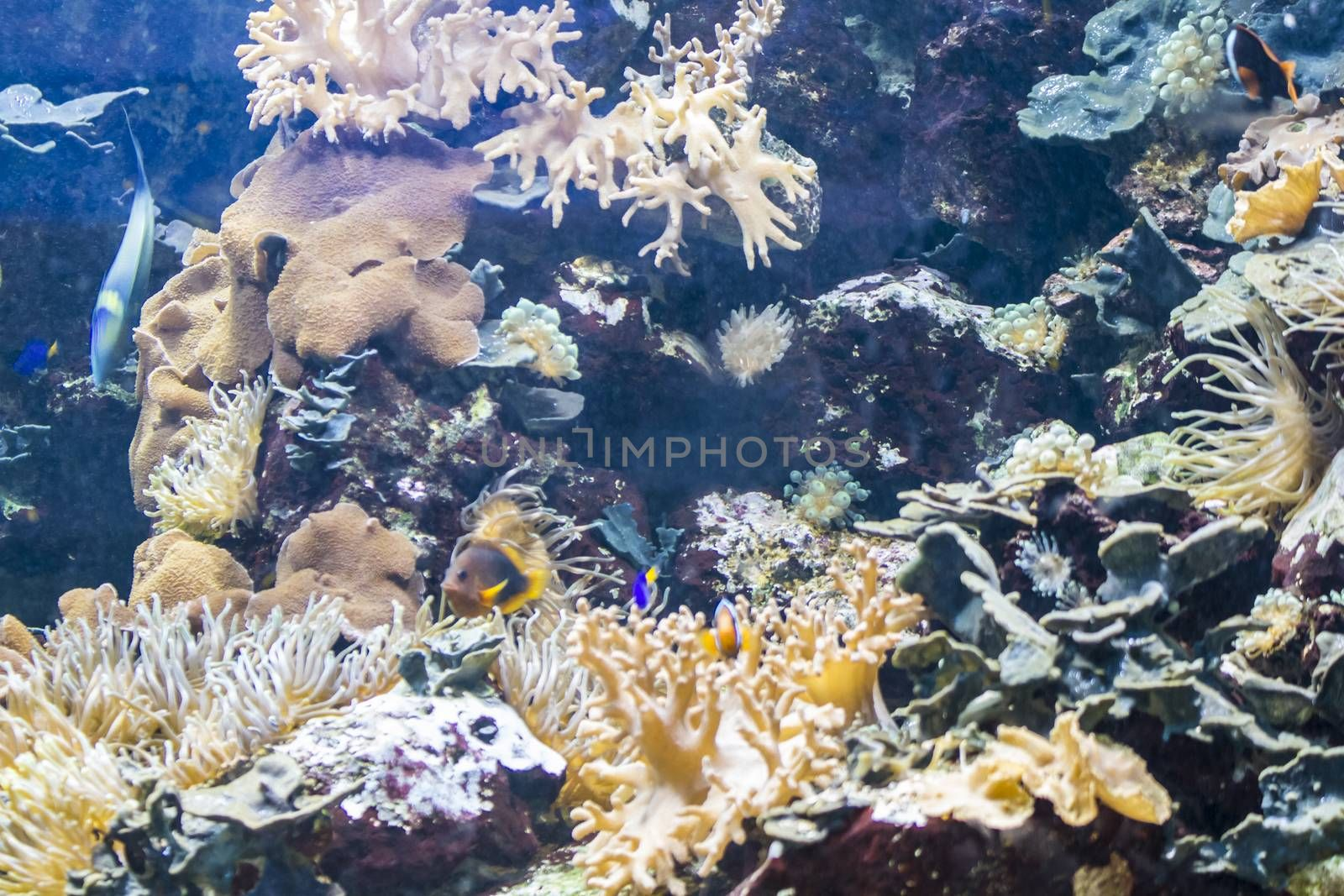 underwater, seabed with fish and coral reef