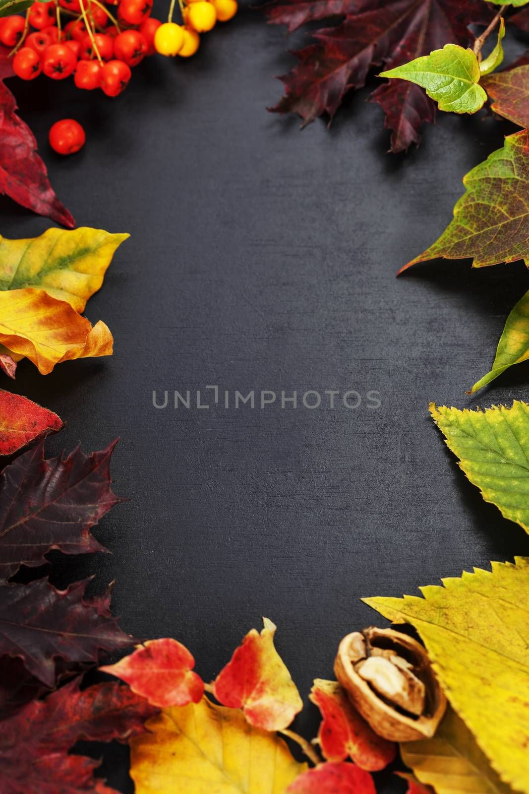 Fall leaves for an autumn composition with copy space